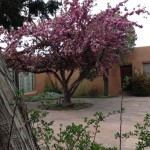 Spanish Colonial Art Museum - Courtyard with Blooming Tree
